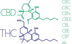 Cannabis y canabinoides (PDQ®)–Versión para pacientes
